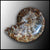 AMM254 Whole Polished Ammonite