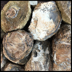 Eden Valley Petrified Wood (full rounds)