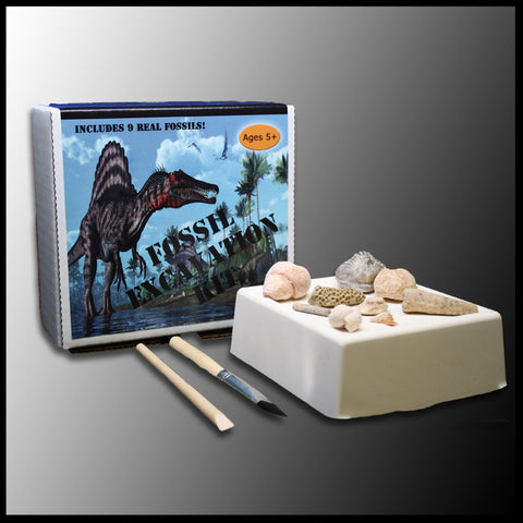 Fossil Excavation Kit | The Gem Shop, Inc