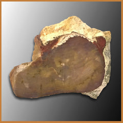 PET215 Grassy Mountain Petrified Wood Specimen