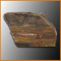 PET218 Grassy Mountain Petrified Wood Specimen