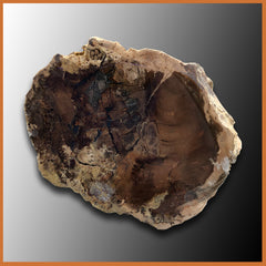 PET232 McDermitt Petrified Wood Limb