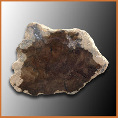 PET235 McDermitt Petrified Wood Limb