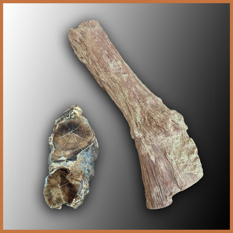 PET240 Petrified Wood Limb Cast