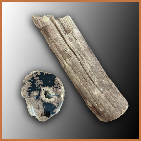 PET244 Petrified Wood Limb Cast