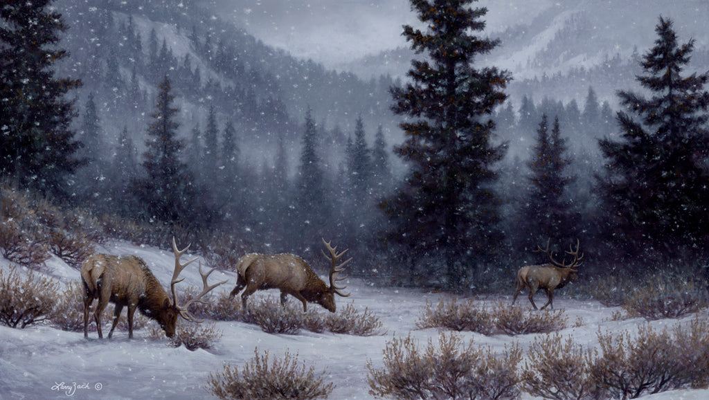 Evening Solitude - Rocky Mountain Elk