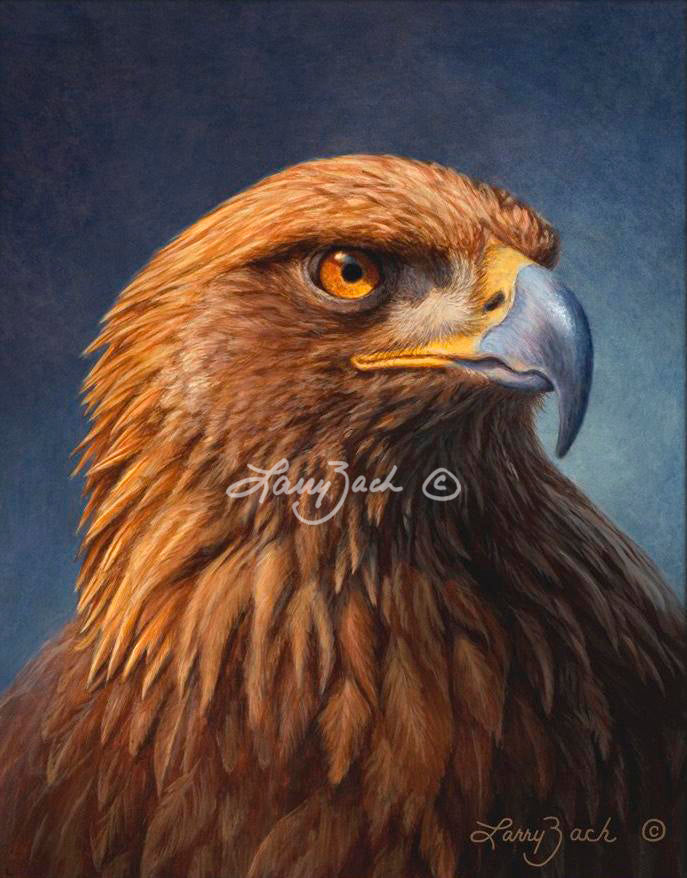 Golden Eagle Portrait by Larry Zach