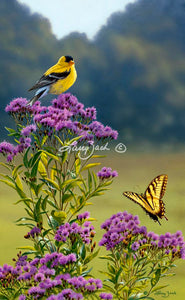 Goldfinch on Ironweed