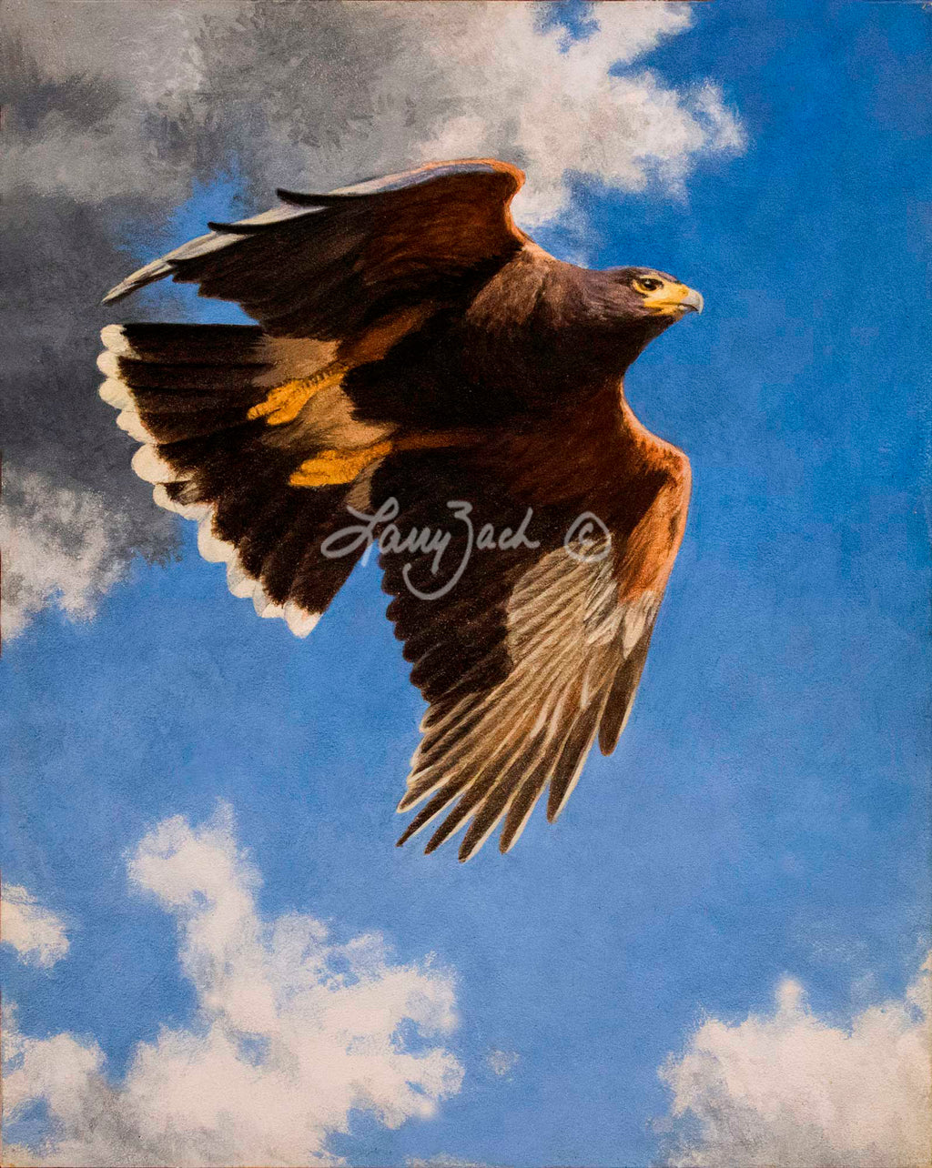On the Hunt – Harris Hawk by Larry Zach