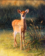 Summer Whitetail Fawn by Larry Zach