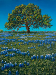 Blue Bonnet Country