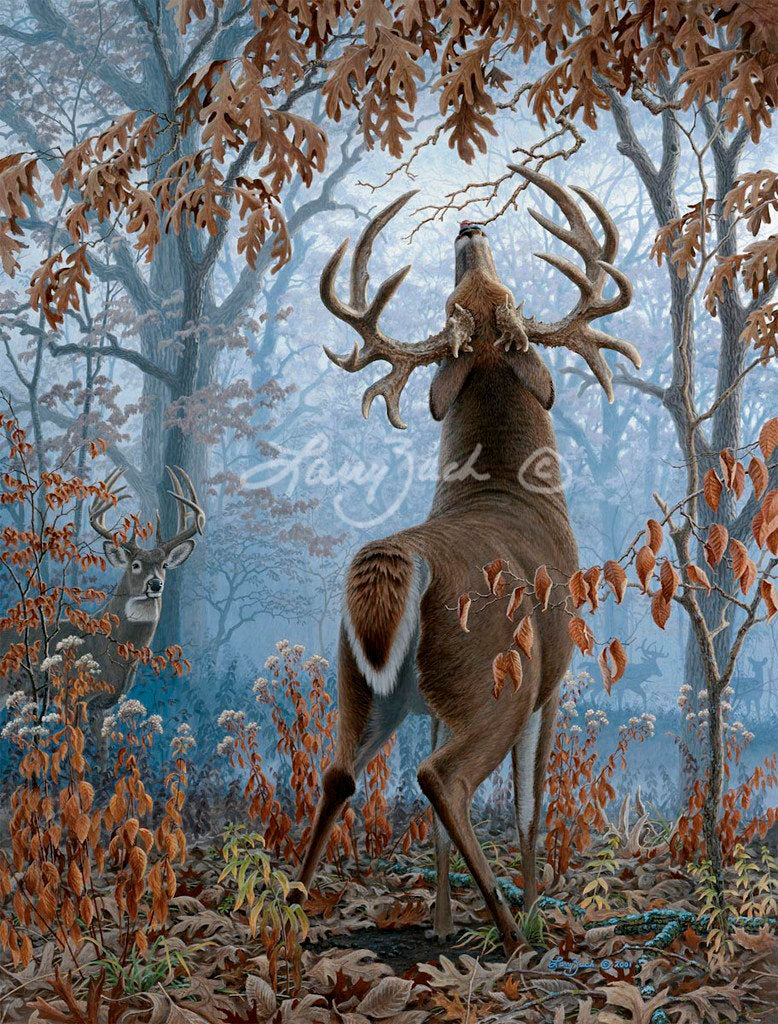 Big Timber Bucks