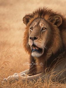 Serengeti Warrior-African Lion