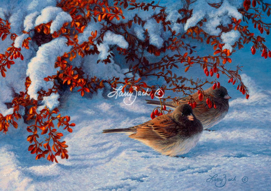 Winter Pair Juncos