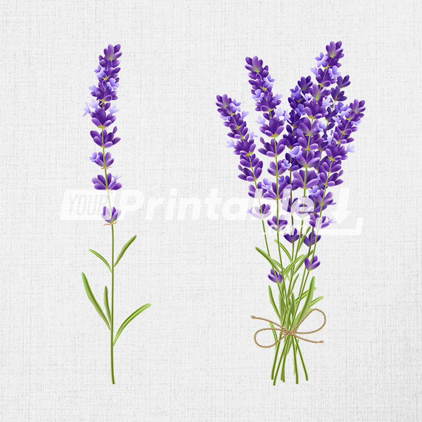 Lavender Bouquet Realistic Illustration