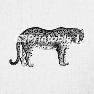 Leopard Animal Clipart Illustration Instant Digital Download