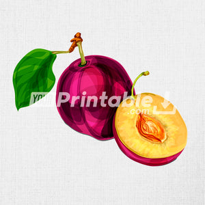 Blue Natural Plum Fruit Illustration - Digital Download