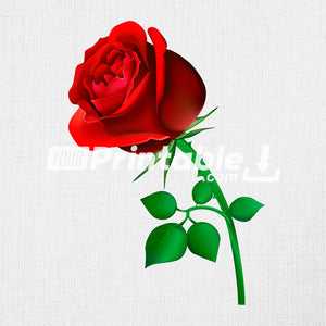 Red Rose Illustration - Digital Download