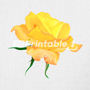 "Botanical Illustration ""Yellow Amazone Rose"" - Digital Download"