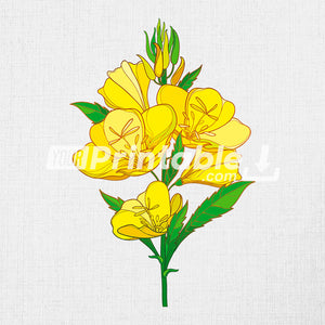 Yellow Evening Primrose Flower Illustration