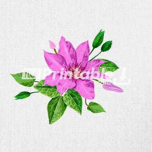 Purple Clematis Vintage Illustration - Digital Download
