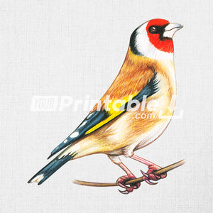 Flowering Cherry Branch With Bird Illustration - Digital Download