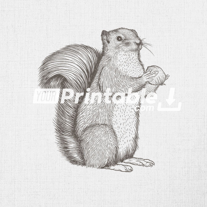 Squirrel Animal Clipart Illustration Instant Digital Download
