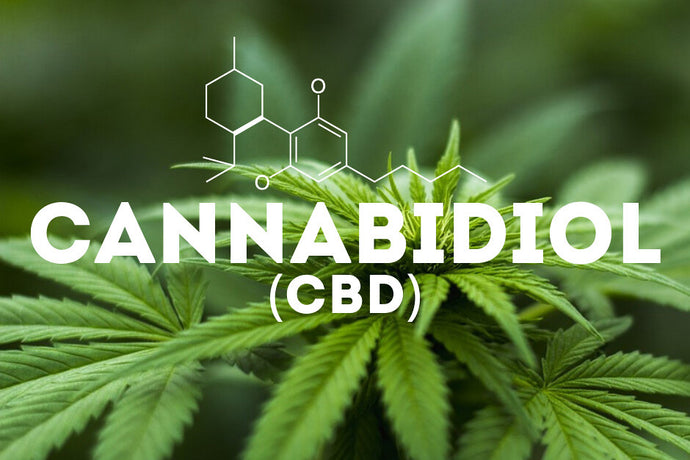 Cannabis, Hemp and Cannabidiol (CBD), What's the difference?