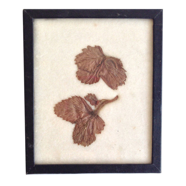 Framed Botanical Specimen
