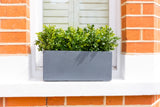 Beautiful Buxus - Window Box
