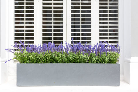 Luscious Lavender - Window Box