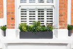 Glorious Greens - Window Box