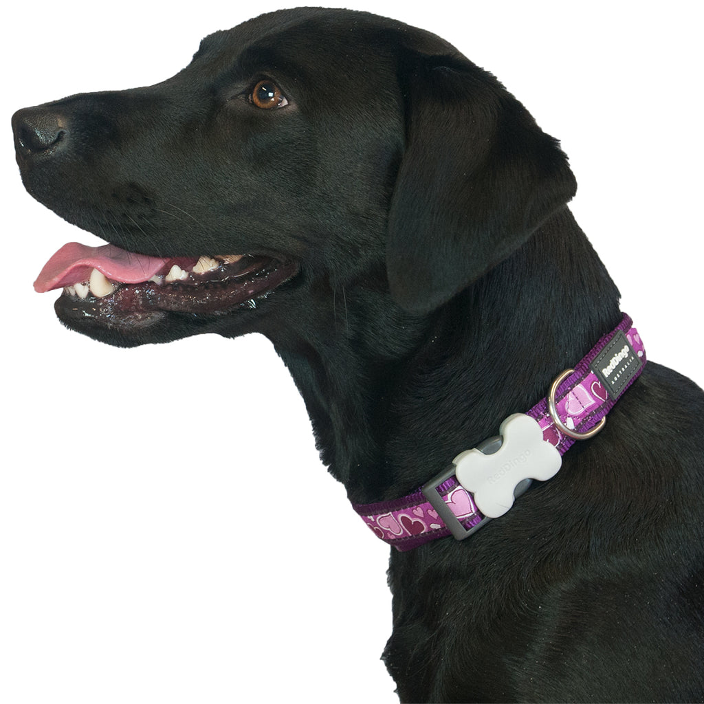 Purple Breezy Love Red Dingo Dog Collar