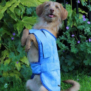 Chiller Chien Dog Cooling Coat – Blue