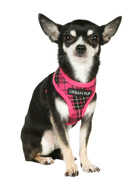 Fuschia Pink Tartan Dog Harness - Modelled by Dog