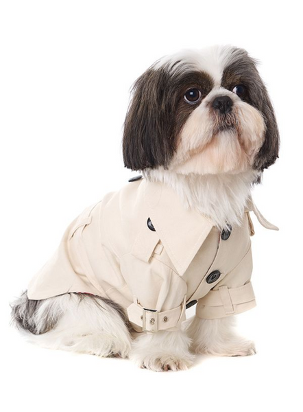 Classic Trench Dog Coat - Modelled by Dog