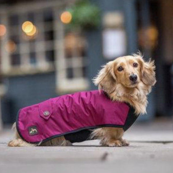 Dachshund Underbelly Coat in Black or Burgundy