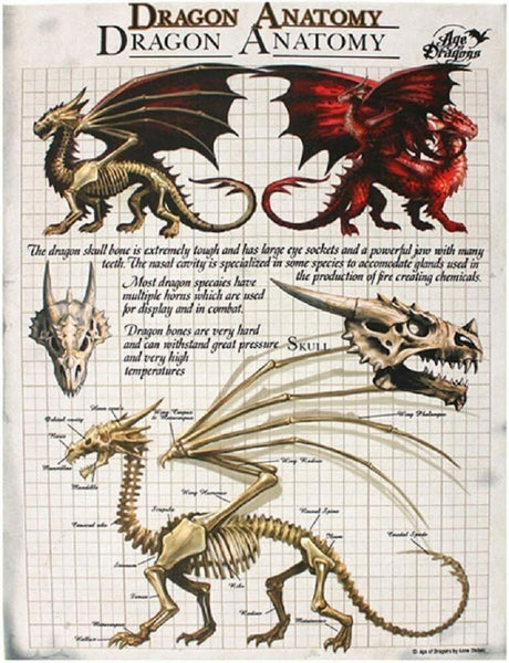 DRAGON ANATOMY CANVAS PICTURE PLAQUE BY ANNE STOKES 19X25CM