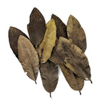 Guava Leaves - 10 Pack