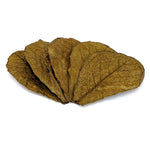 Indian Almond Leaves - 10 Pack