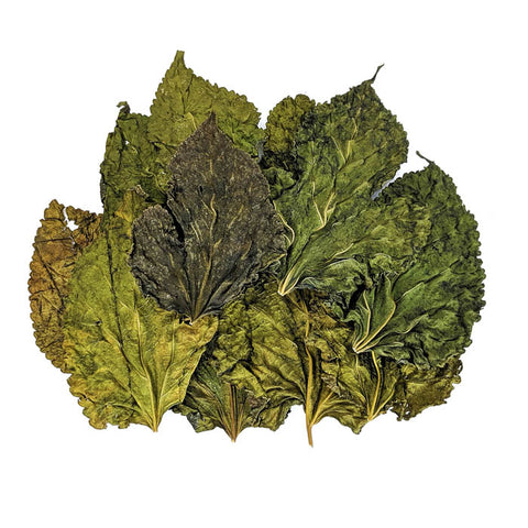 Mulberry Leaves - 10 Pack