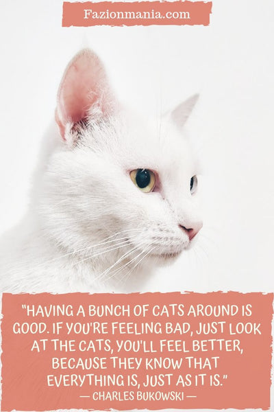 Motivational Cat Quotes
