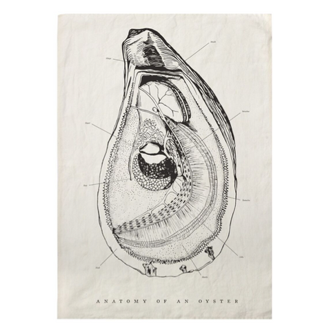 Oyster Anatomy Kitchen Towel