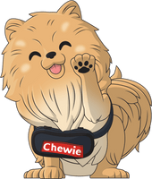 Chewie the Pomeranian