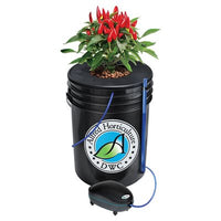 Alfred DWC 1-Plant System