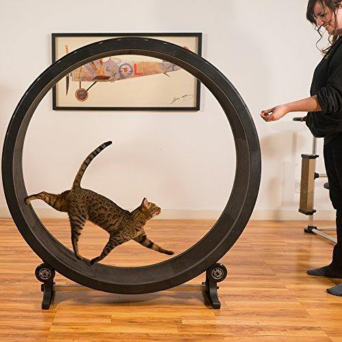 Cat Exercise Wheel - It's Okay To Be Weird