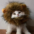 Cat Lion Mane - It's Okay To Be Weird