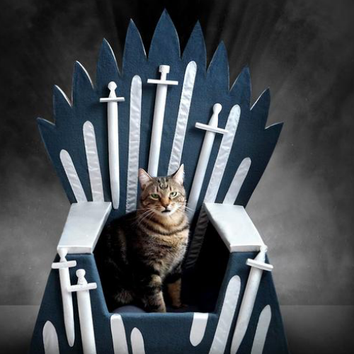 Game Of Thrones Pet Throne - It's Okay To Be Weird