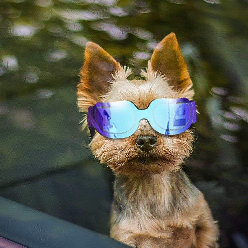 Doggy Sunglasses - It's Okay To Be Weird
