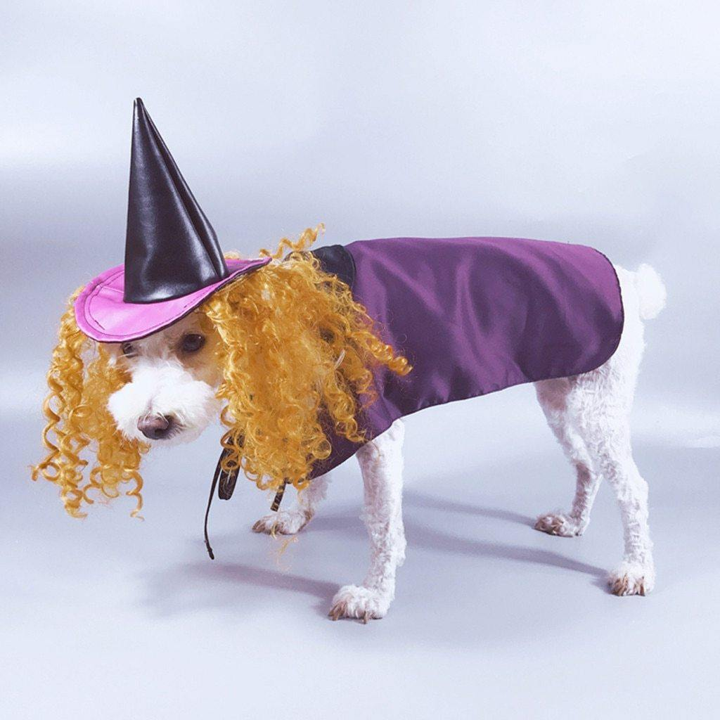 Witch Pet Costume - It's Okay To Be Weird